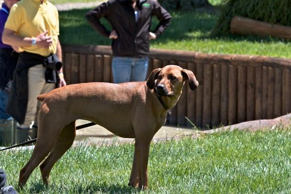 Rolexinbetween-dogs_2