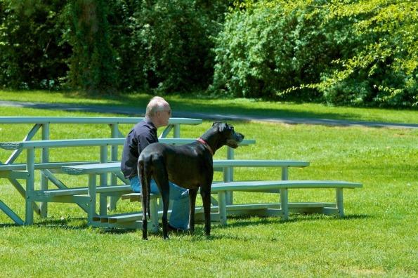 Rolexinbetween-dogs_3
