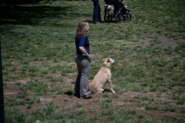 Rolexinbetween-dogs_6