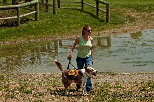 Rolexinbetween-dogs_8