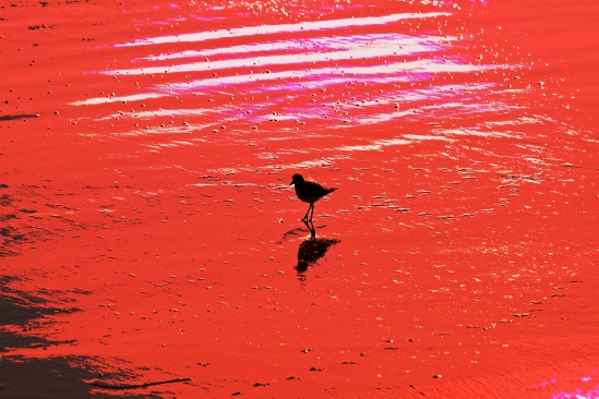 IMG_6798 - red tide